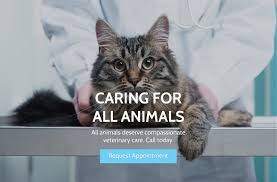 arlington cat clinic animal clinic of arlington veterinarian in arlington tx usa home