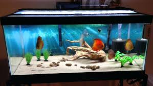 No Maintenance Fish Tanks Low Maintenance Fish Tank Uk Mini ... Amazing Aquarium Designs For Your Comfortable Home Interior Plan 20 Design Ideas For House Goadesigncom Beautiful And Awesome Aquariums Cuisine Small See Here Styfisher Best Stands Something Other Than Wood Archive How To In Photo Good Depot Kitchen Cabinet Sale 12 To Home Aquarium Custom Bespoke Designer Fish Tanks Perfect Modern Living Room Lighting 69 On Great Remodeling Office 83 Design Simple Trending Colors X12 Tiles Bathroom 90