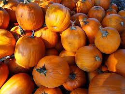 Pumpkin Patch Auburn Al by Pick Your Own Pumpkins In West Blocton News Tuscaloosa News