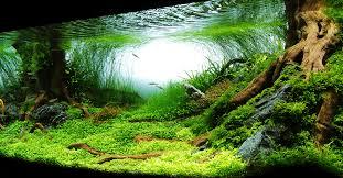 aquarium d eau douce aquarium et bassin
