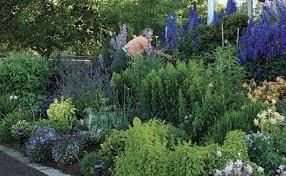 the best flowers for your cutting garden gardening