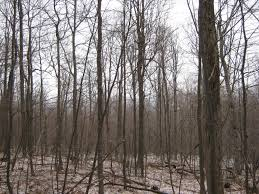 9 Acre Building Lot Bordering State Land Near Ithaca - NY LandQuest Alachua Countys Best Birding Sites Ithaca Trails Park Missouri State Parks 9 Acre Building Lot Bordering Land Near Ny Landquest Forest Walk In The Dupont Waterfalls Tour Hike Cabin And Yellow Barn Cayuga Trail Roy H Preserve Finger Lakes Trust Hammond Hill Go Hiking Ramapo Mountain Njurbanforestcom