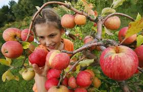 Best Pumpkin Patch Near Corona Ca by Best Apple Picking Near Los Angeles Cbs Los Angeles