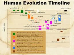 human evolution series set 2 ppt