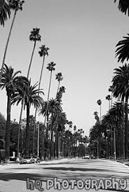 Palm Trees Black And White Tumblr Travel Locations California Los Angeles