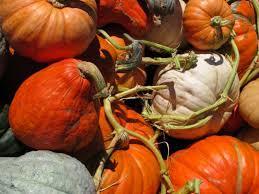 Oak Glen Pumpkin Patch Yucaipa by The Pumpkin Patch At Live Oak Canyon Redlands Ca Patch
