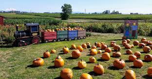 Best Pumpkin Patches Near Milwaukee by Bushue U0027s Family Farm
