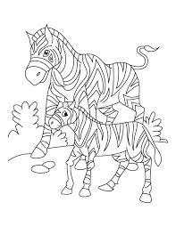 A Zebra With Her Young Looking For Grass In South Africa Coloring Page