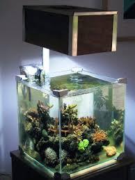 aquarium nano eau de mer aménagement aquarium nano