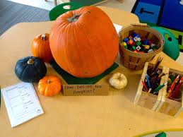 Spookley The Square Pumpkin Activities Pinterest by Thinking And Learning In Room 122 Pumpkin Math Provocations
