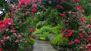 Desktop Backgrounds Flower Gardens
