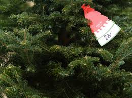 Types Of Christmas Tree Leaves by 4 Popular Christmas Tree Types U0026 How To Decorate Them