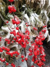 Winterberry Christmas Tree Farm by Plants Morris County Farms Inc
