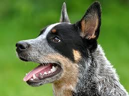 medium medium sized dog breeds medium dog list