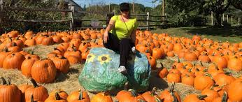 Norms Pumpkin Patch 2015 by Apple Picking At Russell Orchards Gina Pacelli