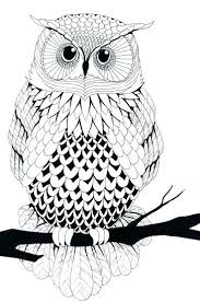 Full Image For Printable Owl Coloring Pages Adults Free If Youre