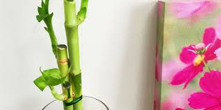 Plants In Bathroom Good For Feng Shui by Plant Air Cleaning Plants Awesome Bamboo Indoor Plants The 25