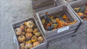 Pumpkin Farms Wisconsin by Visiting Spieker U0027s Pumpkin Farm Random Lake Wi Youtube