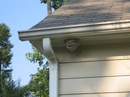 hornet nest removal how to get rid of hornets safely and easily