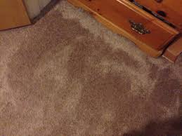Dog Urine Wood Floors Get Smell Out by How To Remove Cat Urine Smell With Pictures Wikihow