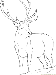 Hunting Coloring Pages Deer Pictures To Print Of Baby