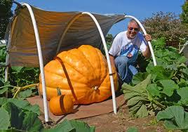 Nekoosa Pumpkin Fest 2017 by Park Falls Man Grows Giant Pumpkin Community Apg Wi Com