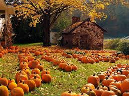 Pumpkin Patch Greenbrier Arkansas by Blog Tim Stein Realtor