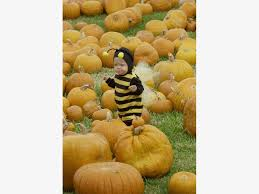 Nearby Pumpkin Patches by Minnesota 2017 Pumpkin Patch Guide Maple Grove Mn Patch