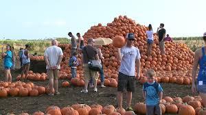 Pumpkin Patch San Jose 2015 by Despite Pumpkin Shortage Aloun Farms Expects Big Crowds For