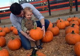 Del Oso Pumpkin Patch Lathrop Ca by For A 2 Year Old Toddler Dell U0027osso Really U0027rocks U0027 News