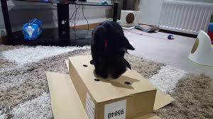Cat Whack A Mole DIY Entertainment