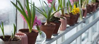 bulbs to plant this autumn house in the shires