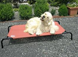 coolaroo raised dog bed restate co