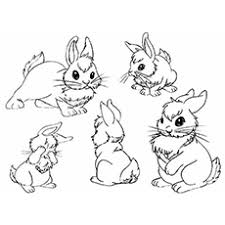 The Bunnies In Different Postures