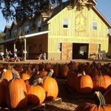 Hunsader Farms Pumpkin Festival Directions by Wesley Chapel Lutz Fl Hulafrog Hula List 6 Fabulous Farms