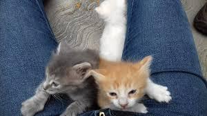 orange cat names merrell on orange cat loki orange kitty