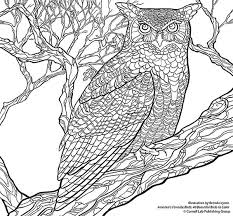 Cornell Lab Great Horned Owl Coloring Page Sm SheetsAdult
