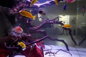 freshwater modern aquarium aquarium architecture moderne