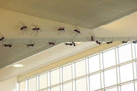 Get Rid Ant Naturally From your Kitchen