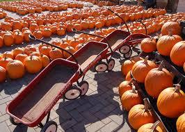 Pumpkin Farms Wisconsin by 9 Best Fall In Wisconsin Corn Mazes Images On Pinterest Farm