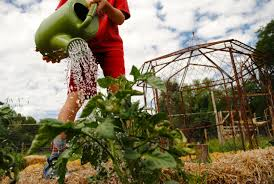 Pumpkin Patches Near Colorado Springs Co by Guidestone Colorado We Grow Farmers Home