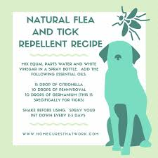 Ticks On Christmas Trees by Tick Repellent That U0027s Safe For Humans And Dogs Remi Pinterest