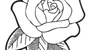 rose flower drawing pictures Download Smartphone