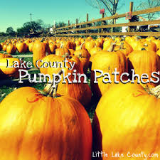 Wisconsin Pumpkin Patches 2015 by Pumpkin Patches In Lake County Little Lake County