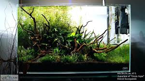 1737 Best Aquascape Images On Pinterest - Aquascape Design ... Aquascape Designs For Your Aquarium Room Fniture Ideas Aquascaping Articles Tutorials Videos The Green Machine Blog Of The Month August 2009 Wakrubau Aquascaping World Planted Tank Contest Design Awards Awesome A Moss Experiment Driftwood Sale Mzanita Pieces Two Gardens By Laszlo Kiss Mini Youtube Warsciowestronytop