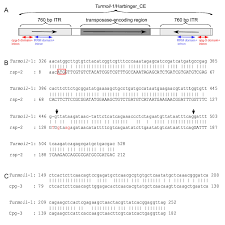 Transduplication Resulted In The Incorporation Of Two Proteincoding