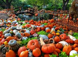 Grapevine Texas Pumpkin Patch by 10 Great Pumpkin Patches In Texas