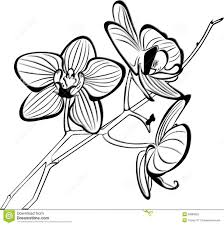 orchid clipart black and white 6