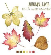 botanical leaf drawings Google Search