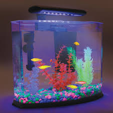 Homemade Lava Lamp Fish Tank by Aquarium That Uses Blue Light And Specialty Plants And Gravel To